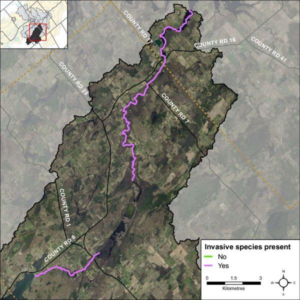 Figure 31 Invasive species along Irish Creek