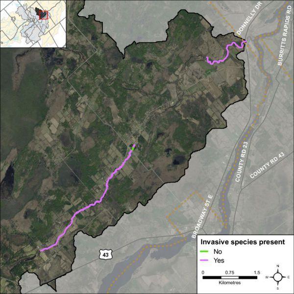 Figure 35 Invasive species along Rideau Creek