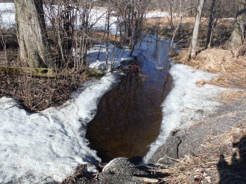 Spring photo of a headwater sample site in the Rideau Creek catchment located on Heritage Drive