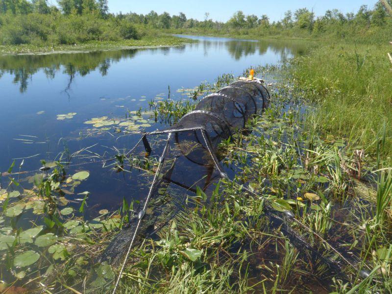 RVCA staff set fyke nets along the system to sample fish in Irish Creek