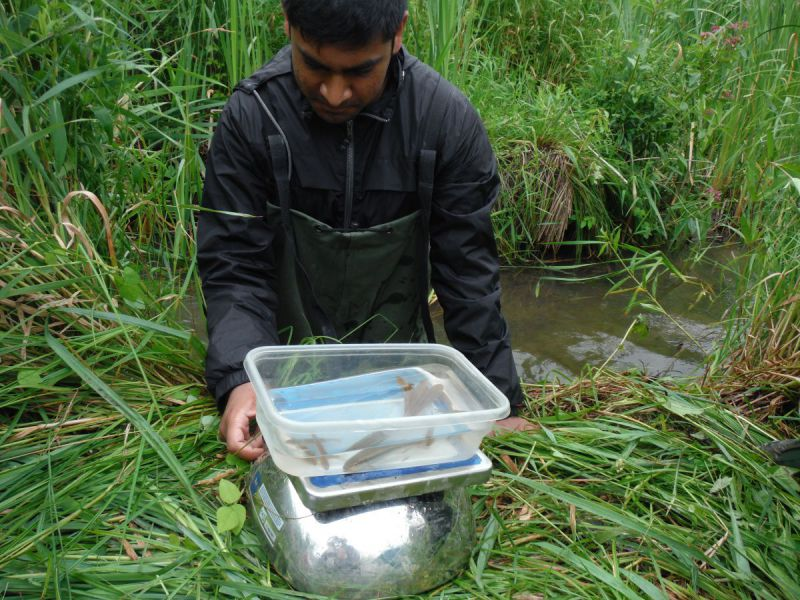 Weighing and identifying fish on Rosedale Creek