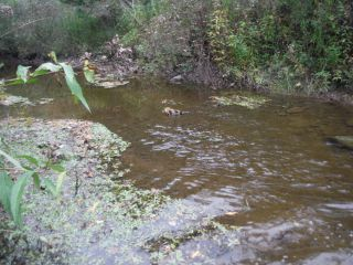 Site conditions at the Hobbs Drain Bleeks Road OBBN sample location at Bleeks Road