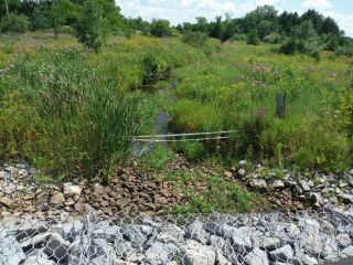 A summer photo of the headwater sample site in the Jenkinson Drain catchment located on Flewellyn Road