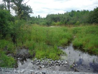 A summer photo of the headwater sample site in the Jock River Richmond Fen catchment located on Munster Road