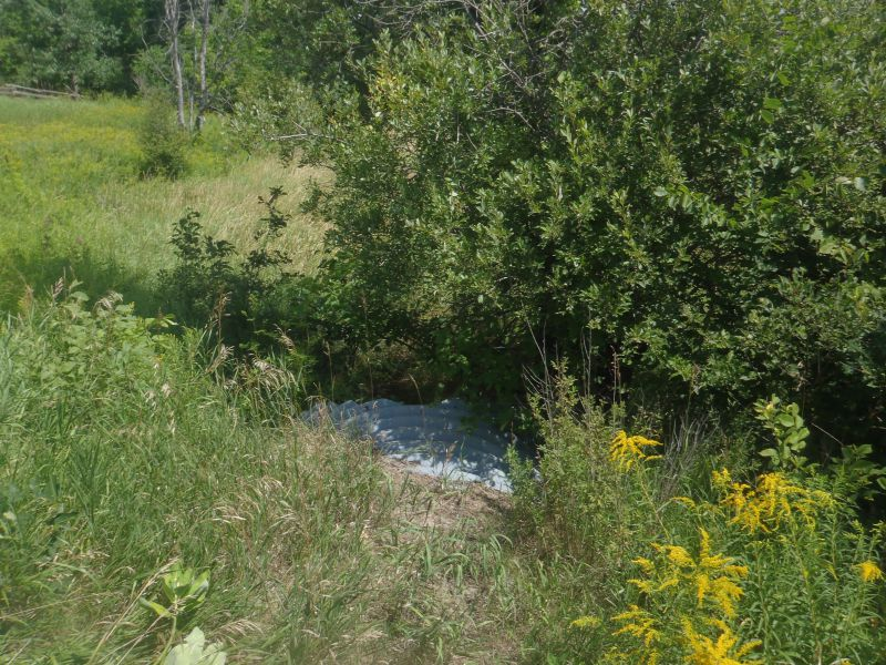 A summer photo of the headwater sample site in the Long Lake catchment located on Long Lake Road