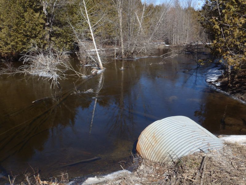 A spring photo of the headwater sample site in the Long Lake catchment located on McLean Road