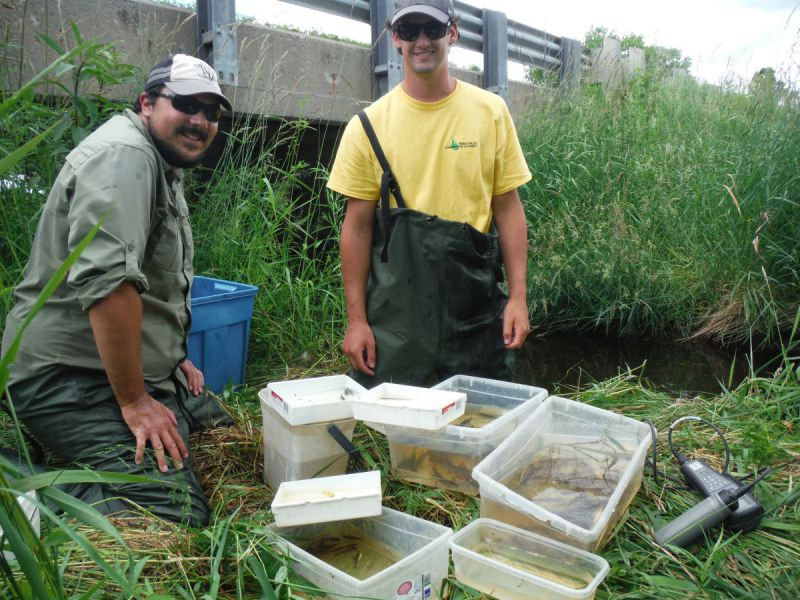 RVCA staff sorting fish captured in Barbers Creek into containers by species for identification